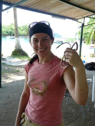 Sara Oxybelis Panama4